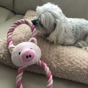 Pig squeaky toy for dogs